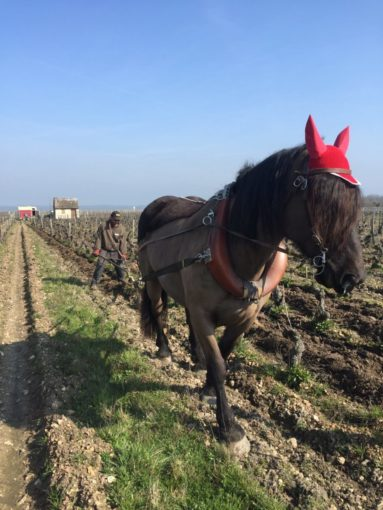 Le décavaillonnage au cheval